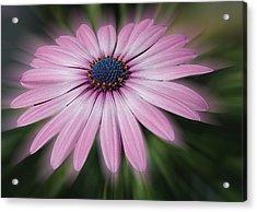 Flower Zoom Acrylic Print
