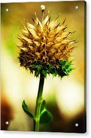 Flowered Thorns Acrylic Print