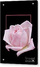 Flowerin Frame -10 Acrylic Print