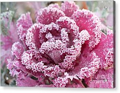 Flowering Cabbage Acrylic Print by Yumi Johnson