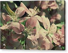 Flowering Crabapple Muted Acrylic Print by Mark J Seefeldt