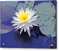 Flowering Lily-pad- St Marks Fl Acrylic Print