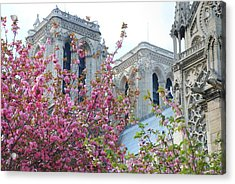 Acrylic Print featuring the photograph Flowering Notre Dame by Jennifer Ancker