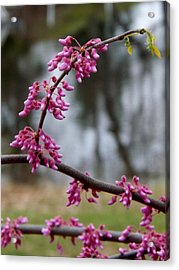 Acrylic Print featuring the photograph Flowering Tree 1 by Gerald Strine