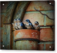 Flowerpot Swallows Acrylic Print by Jai Johnson