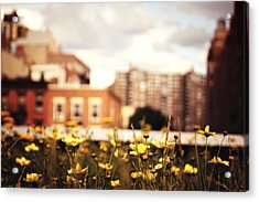 Flowers - High Line Park - New York City Acrylic Print by Vivienne Gucwa