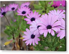 Flowers Acrylic Print by Allen Jiang