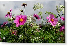 Flowers Acrylic Print by Barbara Walsh