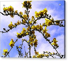 Flowers Cascade Acrylic Print by Guadalupe Nicole Barrionuevo