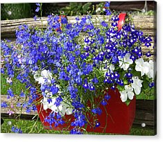 Acrylic Print featuring the photograph Flowers For Summer by Robin Regan
