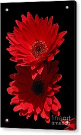Acrylic Print featuring the photograph Flowers From My Son by Cindy Manero