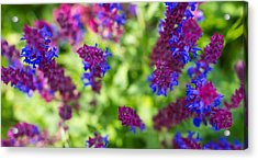 Flowers Acrylic Print by Guillermo Luengas