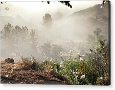 Flowers In The Mist Acrylic Print