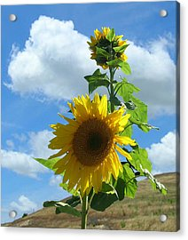 Acrylic Print featuring the photograph Flowers In The Sun by Bonnie Muir