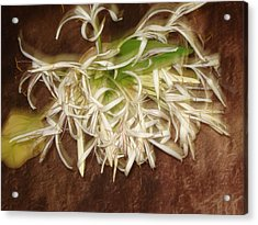 Flowers Acrylic Print by Indrani Moitra