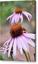 Flowers Acrylic Print by invisibleA