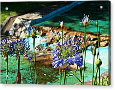 Flowers Acrylic Print by Jenny Senra Pampin