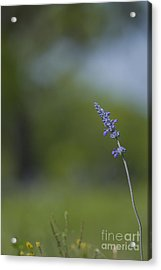 Flowers Of Presidio Acrylic Print