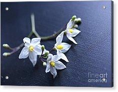 Flowers On A Table Acrylic Print