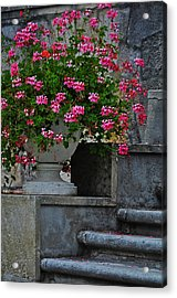 Flowers On The Steps Acrylic Print by Mary Machare