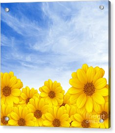 Flowers Over Sky Acrylic Print by Carlos Caetano