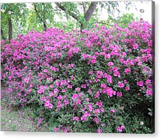 Acrylic Print featuring the photograph Flowers by Shawn Hughes