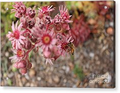 Flowers With Bee Acrylic Print