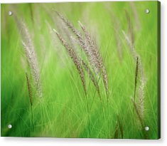 Flowing Reeds Acrylic Print