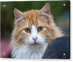 Fluffy Orange Acrylic Print