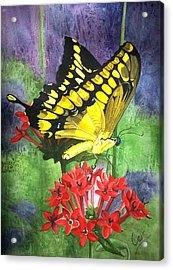Flutter-by Acrylic Print by Karen Casciani