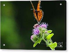 Fluttering Away... Acrylic Print by Christine Kapler