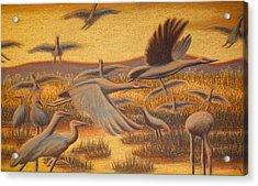 Fly Away Acrylic Print by Thomas Maynard
