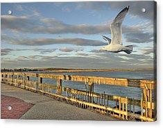 Fly Bye Acrylic Print by David Clark