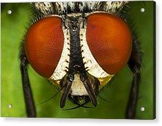 Fly Eyes Acrylic Print