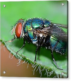 Fly Acrylic Print by Michelle Armstrong
