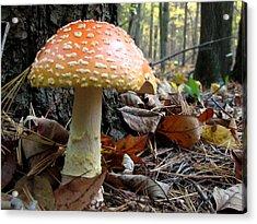 Fly Mushroom Acrylic Print