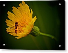 Fly On A Flower Acrylic Print