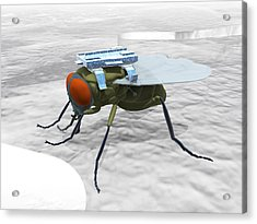Fly With Microchip Acrylic Print by Christian Darkin