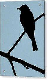 Flycatcher With Bug Acrylic Print