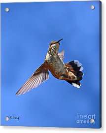 Flying Backwards - No Problem Acrylic Print by Roena King