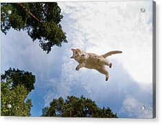 Flying Cat Acrylic Print