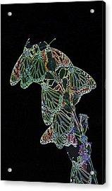 Flying Diamonds Acrylic Print by Rick Rauzi
