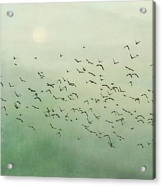 Flying Flock Of Birds Acrylic Print by Laura Ruth