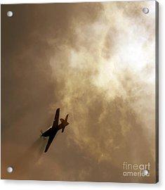 Flying High Acrylic Print by Angel  Tarantella