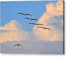 Flying High Acrylic Print by Barry R Jones Jr