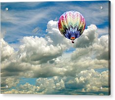 Flying High Acrylic Print by Bonnie Muir