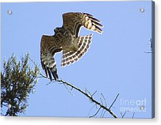 Acrylic Print featuring the photograph Flying High by Johanne Peale