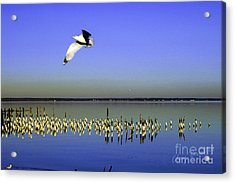 Acrylic Print featuring the photograph Flying Solo by Clayton Bruster
