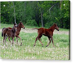 Acrylic Print featuring the mixed media Foals In Dandelions by Bruce Ritchie