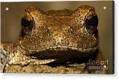Foam Nesting Frog Acrylic Print